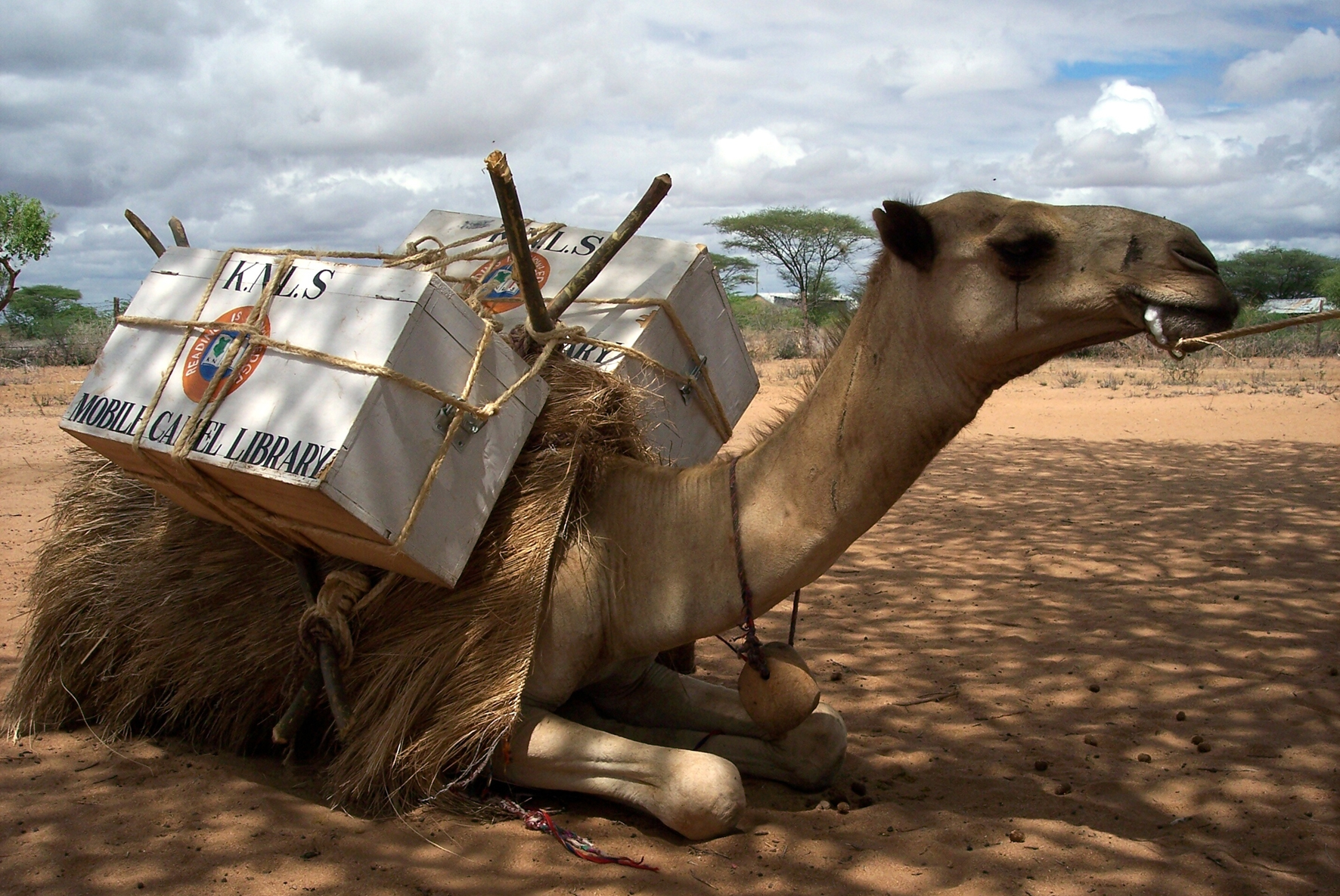 A-Camel-Library